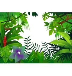 tropical rain forest vector image