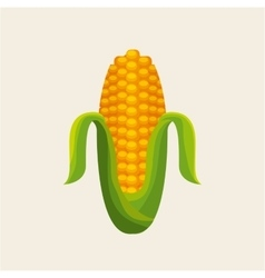 Corn vegetable icon vector