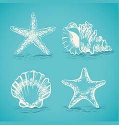 decorative set sketch of seashells and starfish vector image vector image