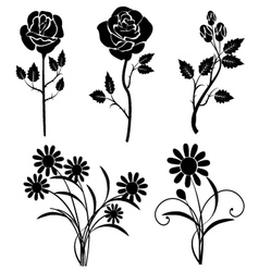 Silhouette roses and daisies vector