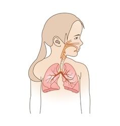 Child respiratory scheme vector