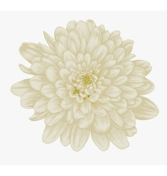 Beautiful beige dahlia isolated on white vector