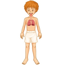 Boy and respiratory system vector image