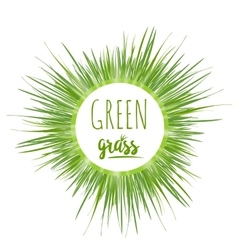 Realistic green grass lawn vector