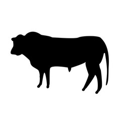 bull the black color icon vector image vector image