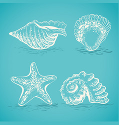 Sketch drawing by hand of different seashells and vector