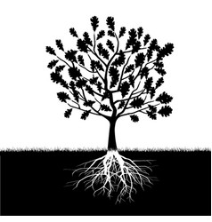 silhouette of oak tree vector image