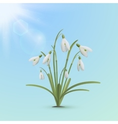 Snowdrop flowers spring background vector