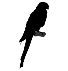 black silhouette of parrot vector image vector image