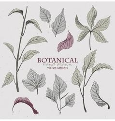 Botanical hand drawn elements vector