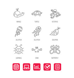 Octopus turtle and dolphin icons jellyfish vector