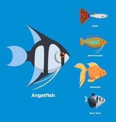 exotic tropical aquarium fish different colors vector image vector image
