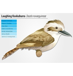 Laughing kookaburra vector