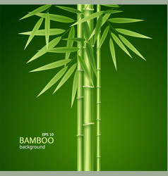 Realistic 3d detailed bamboo shoots background vector
