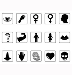 Human feature icons vector
