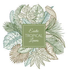 background with different exotic tropical leaves vector image