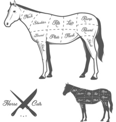 Butchers cuts of horse diagram vector image vector image
