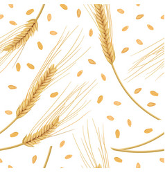 Wheat ears isolated on white background seamless vector