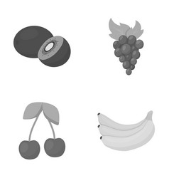Kiwi grapes cherry bananafruits set collection vector