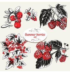 Summer berries vector image vector image