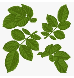 set of beautiful green leaves isolated on white vector image