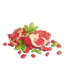 Ripe pomegranates vector image