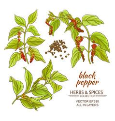 black ground pepper vector image