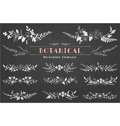 Botanical Decorative Elements vector image vector image