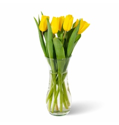 Glass vase with yellow tulips in water isolated vector