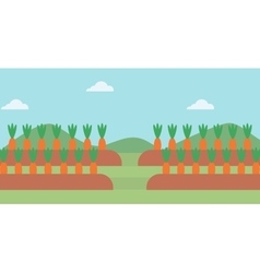 Background of carrots growing on field vector