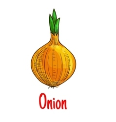 Bulb onion vegetable sketch isolated icon vector