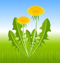 Dandelion herb vector