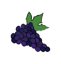 Grape fresh fruit dieting nutrition concept vector