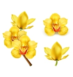 Orchid flowers icons vector image