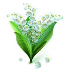 Flower lily valley Bouquet lily of valley vector image vector image