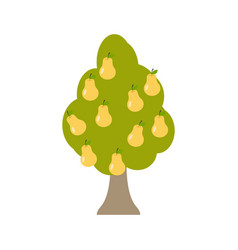 Pear tree isolated garden wood with pears on vector