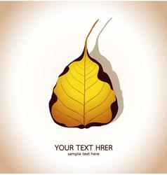 Bodhi leaf Natural vector image vector image