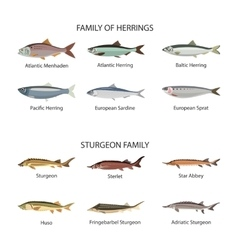 Fish set in flat style design Herrings and vector image