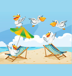 Scene with pelican birds on the beach vector