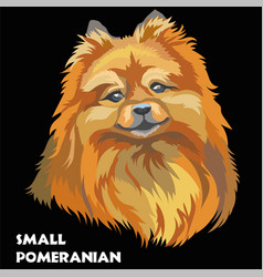 colored small pomeranian vector image vector image