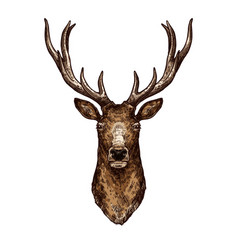 deer elk or reindeer sketch of wild forest animal vector image vector image