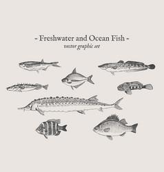 Fish vintage set vector