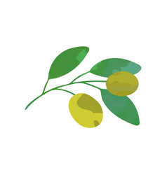 Olive branch with green leaves natural vector