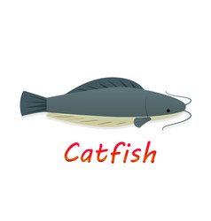 cartoon catfish in flat style vector image