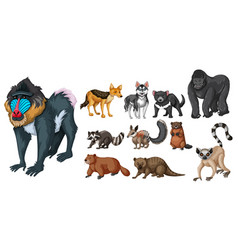 different kinds of wild animals vector image