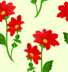 Seamless texture red Dahlia summer flower vector image