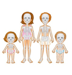 Skeletal system of human vector image vector image
