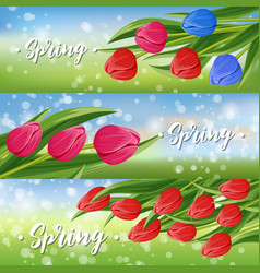 Spring greeting card set with blooming tulip vector