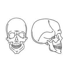Skull drawing isolated vector image vector image