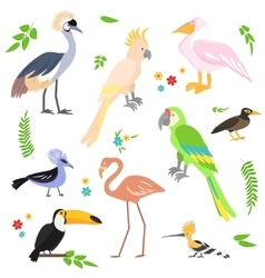 Colorful icons birds tropical birds collection vector